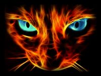 Awesome-fire-cat